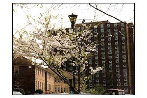 Photo 6 - St. Paul Apartments & Village, 1330 Forsyth Street, Macon, GA 31201